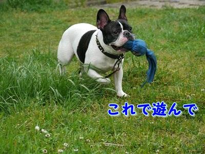遊んで (4)