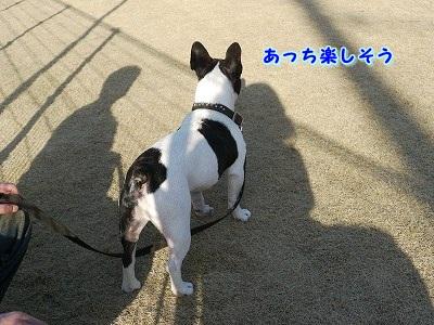 hazikasii (3)