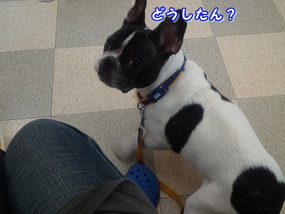 アトピー (2)