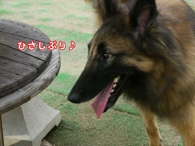 ひさしぶり (3)