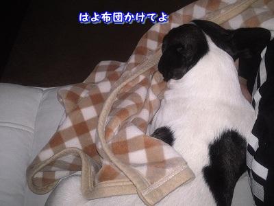 さむい (6)