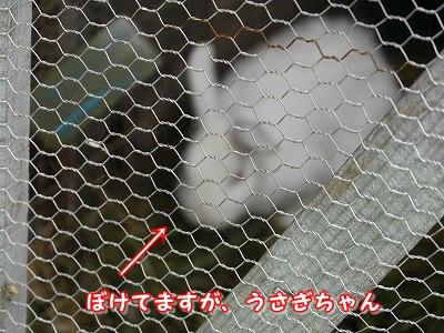実家 (7)