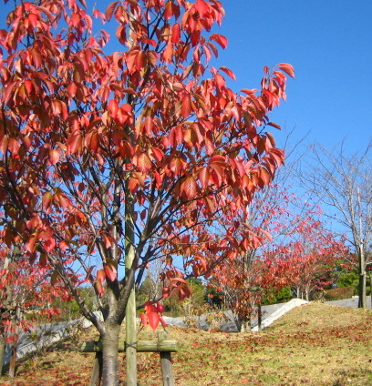 大きな公園紅葉