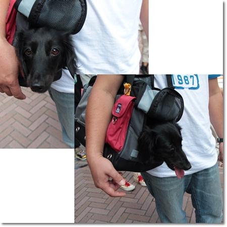 new_bag2.jpg