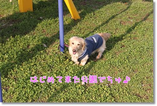 IMG_05261.jpg