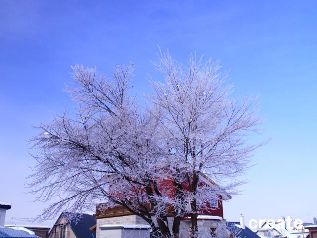 DPP_家の周囲入れて樹氷0001