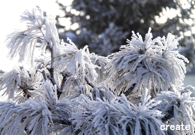 DPP_松の樹氷0001
