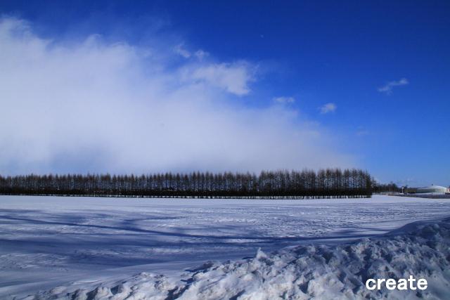 DPPー068 雪原とカラ松0001
