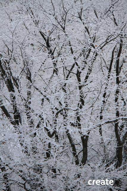 DPPー038樹氷大木アップ0001