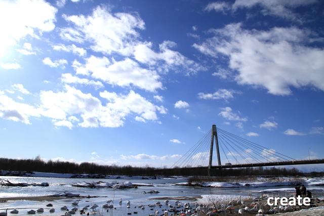 DPPー162白鳥大橋0001