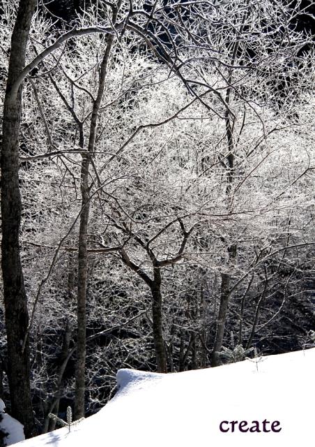 DPPー25831日樹氷アップ 0001