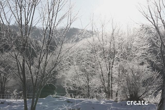 DPPー14131日樹氷  0001