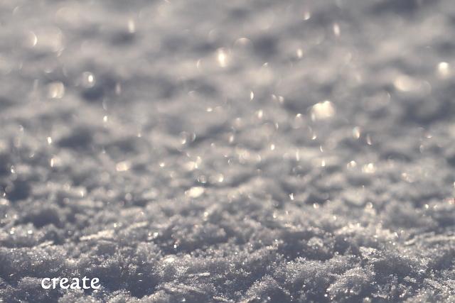 DPP0 272 1日雪のマクロ撮り0001