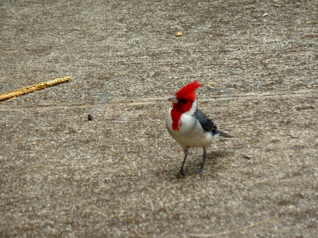 DPP0 668 019 赤い鳥0001