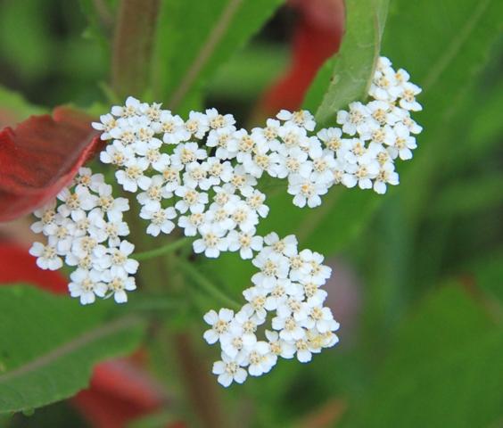 037野の花