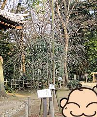 tutsugakudo_13.jpg