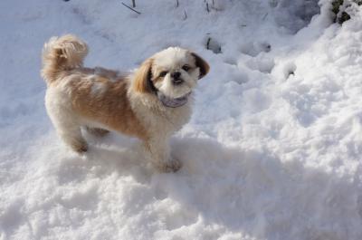 雪の上に獅子丸2