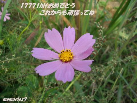 image7491106.jpg