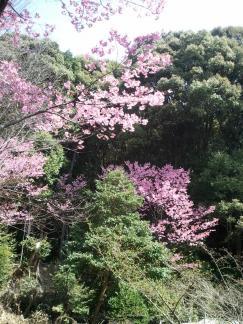 2011/4/10 哲学の道