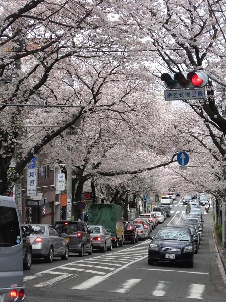 桜トンネル_110409