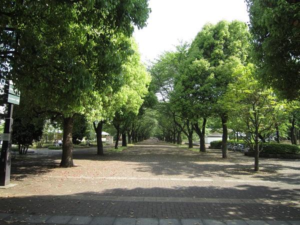 府中の森公園_110508