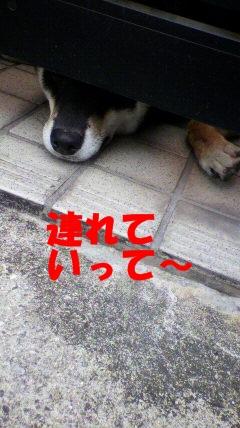 2010102014110001.jpg
