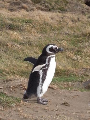 ぱたぱたペンギン