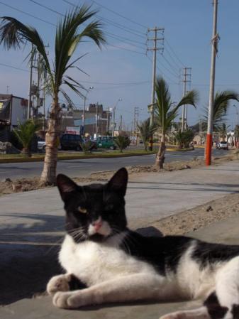 パラカスの猫
