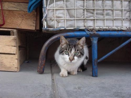ワラス市場の猫