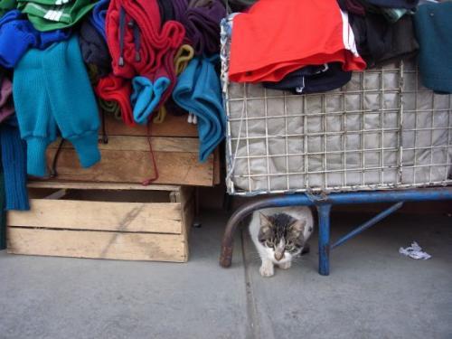 ワラス市場の猫 2