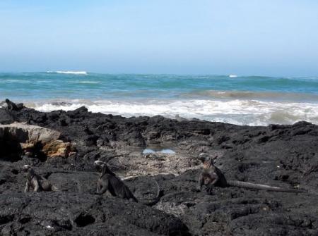 イグアナ海岸