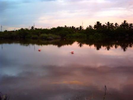 ガラパゴスフラミンゴ