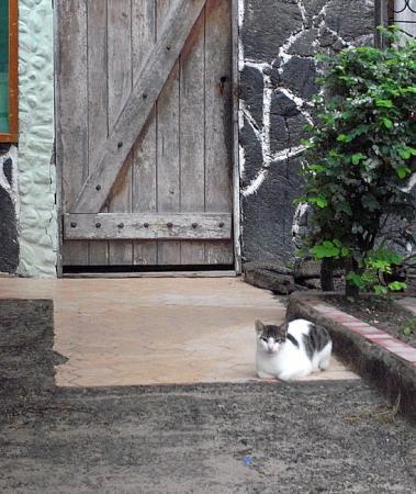 イサベラ島の猫のいる家