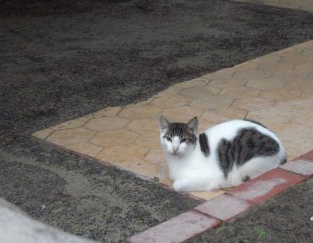 イサベラ島の猫