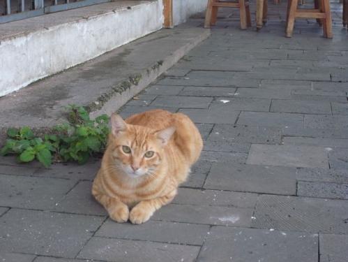 食堂の猫2