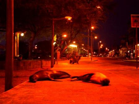 夜のアシカたち (5)