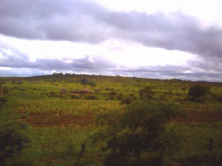 アフリカン・バスからの景色