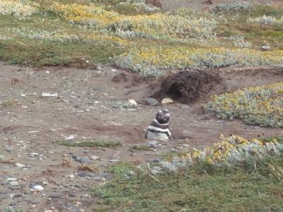 帰りをまつ嫁ペンギン