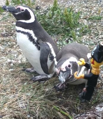 ペンギンとキャプテン
