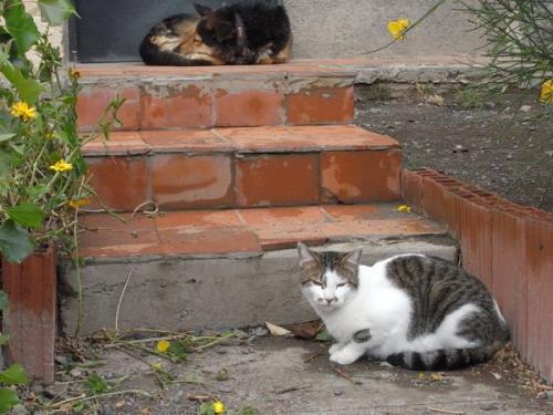 エル・カラファテの猫