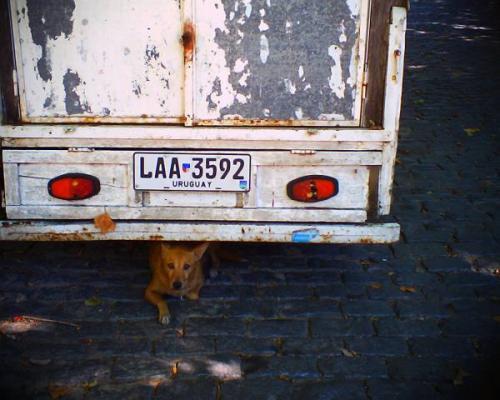 ウルグアイの犬さん by VQ1015 R2