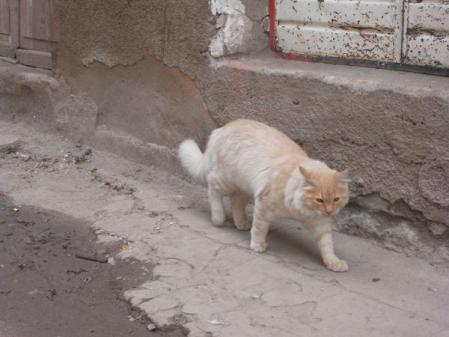 copa-cat2.jpg