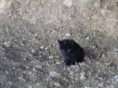 copa-cat.jpg