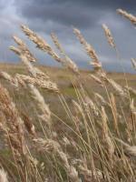 パタゴニアの草原