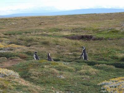 砂浜のペンギン