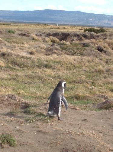 しょぼくれてるペンギン