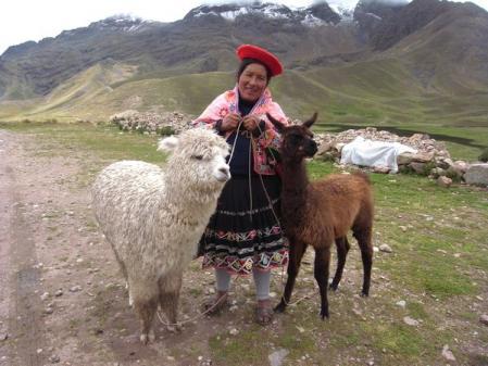 リャマとアルパカ