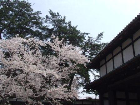 桜祭り2010-2