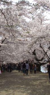 桜祭り2010-3