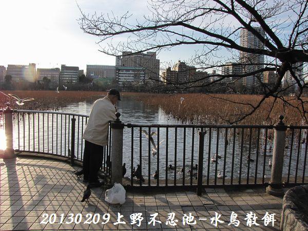 0209shinobazu06.jpg